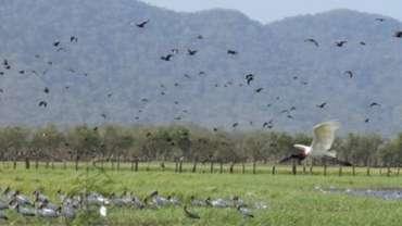 Le parc national Palo Verde au Costa Rica.