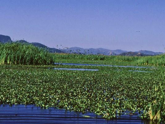 Le parc national Palo Verde, region du Guanacaste Costa Rica