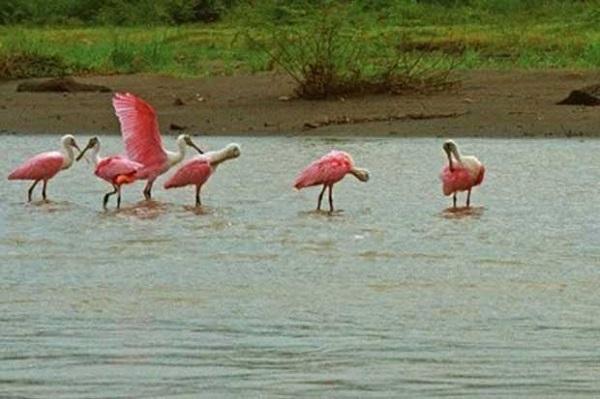 Le parc national Palo Verde Ibis, region du Guanacaste Costa Rica