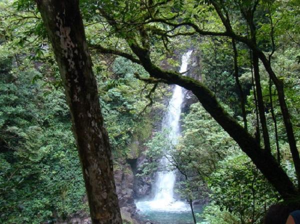 Cascade de Monteverde, San Luis, foret nuageuse, Costa Rica