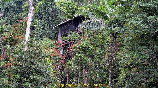 Les chambres dans les arbres au Costa Rica