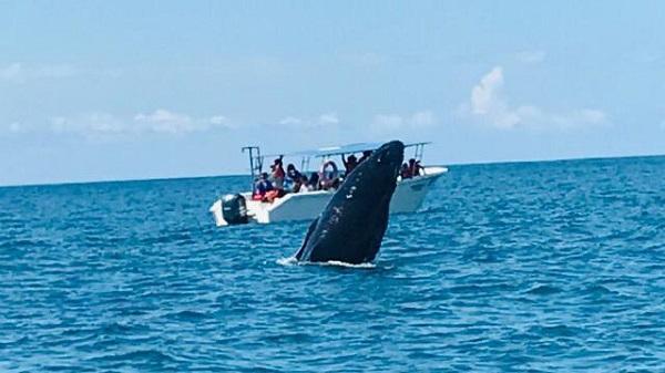 Baleine a Uvita cote Pacifique centrale du Costa Rica