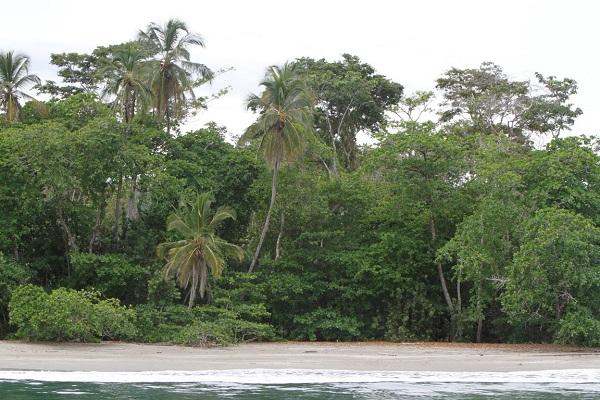 Cahuita et son parc National, cote caraïbe du Costa Rica