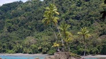 Le parc national de Corcovado, péninsule de Osa, Costa Rica