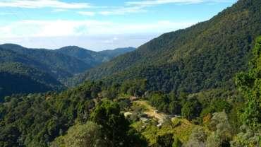 Le parc national des quetzals, Costa Rica.
