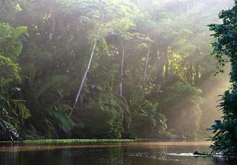Le parc national de Tortuguero