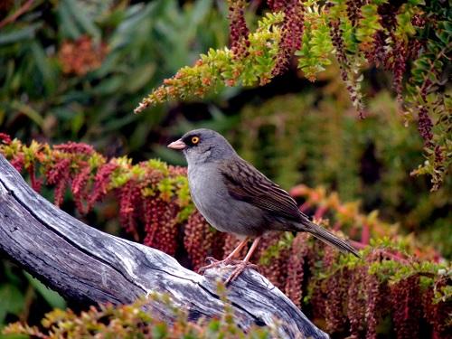Oiseau au volcan Irazu, Parc national, Costa Rica