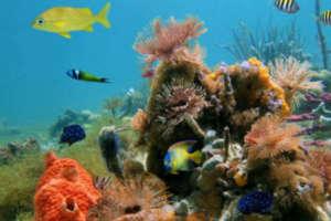 le parc national de Cahuita coraux dans le parc national