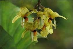 faune et flore du costa rica orchidee