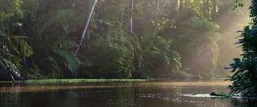 Les canaux de Tortuguero avec Trio de Turismo au Costa Rica