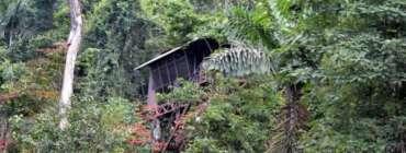 Chambre dans les arbres au Maquenque Eco lodge, Boca Tapada, Costa Rica