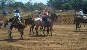 Parrita au nord de Manuel Antonio Festival des mules
