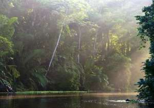 Canal de Tortuguero parc national de Tortuguero Costa Rica