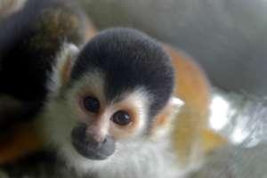 Le parc national de Manuel Antonio singe mono titi