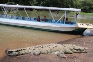Parc national de Carara et RIo Tarcoles Costa Rica