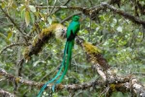 San Gerardo de Dota le Quetzal