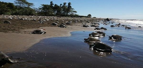 Les plus belles plages du Costa Rica, arribada a playa Nosara