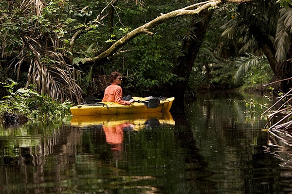 Les canaux de Tortuguero, faune et flore du Costa Rica