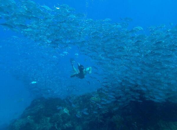 Snorkeling a l'Ile Cano, Drake bay, péninsule de Osa, côte Pacifique, voyage sur mesure au Costa Rica