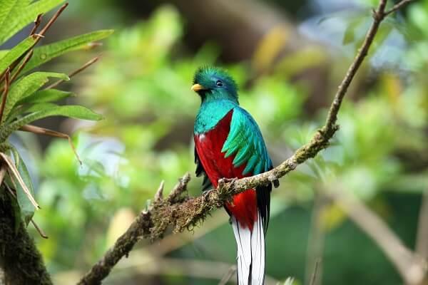 Tarifs et achat des entrées des parcs nationaux du Costa Rica, vacances sur mesure ou a la carte, observation du quetzal au Costa Rica