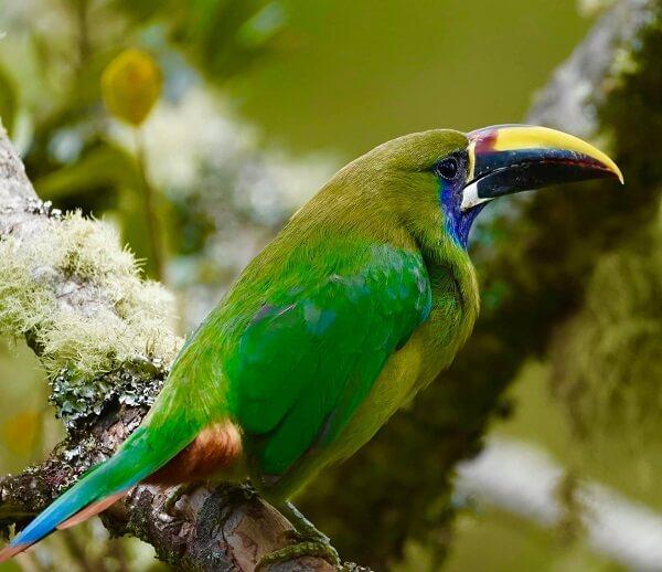 Témoignage de voyageurs au Costa Rica