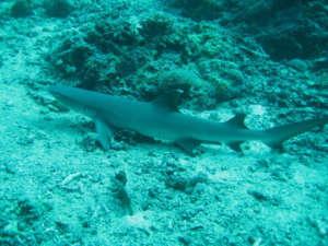 activités excursions visites costarica, plongée sous-marine aux Iles Catalina