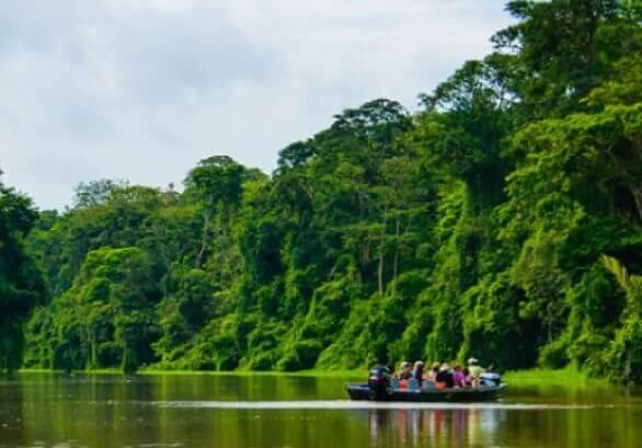 Observations de la flore et de la faune en bateau sur les canaux de Tortuguero