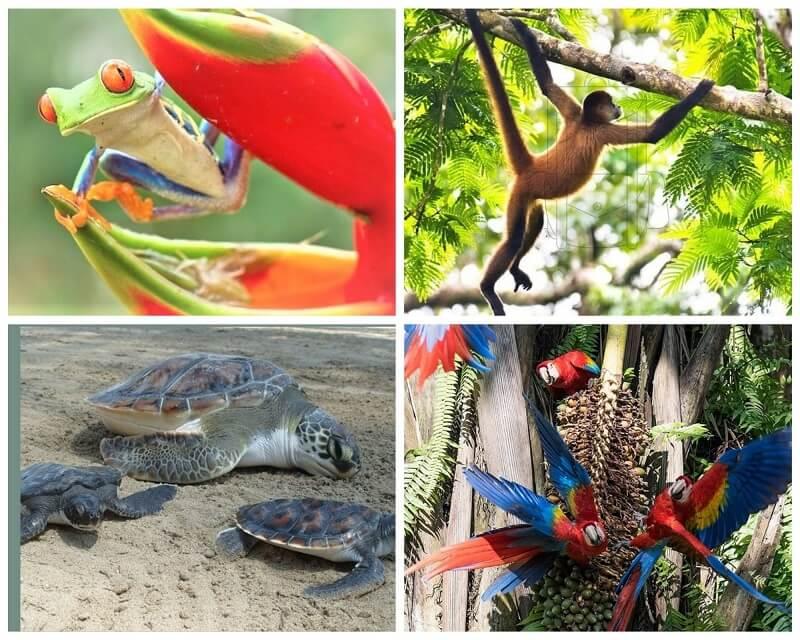 Une faune, des animaux nombreux au Costa Rica. Des vacances a la carte au Costa Rica