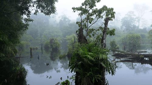 Boca Tapada, Nord caraïbe, foret humide du Costa Rica, lagune, sejour sur mesure au Costa Rica