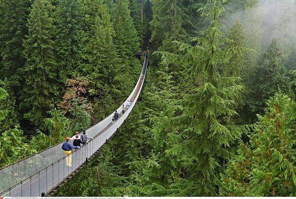 La réserve de Monteverde et de Santa Elena, foret nuageuse et ponts suspendus.