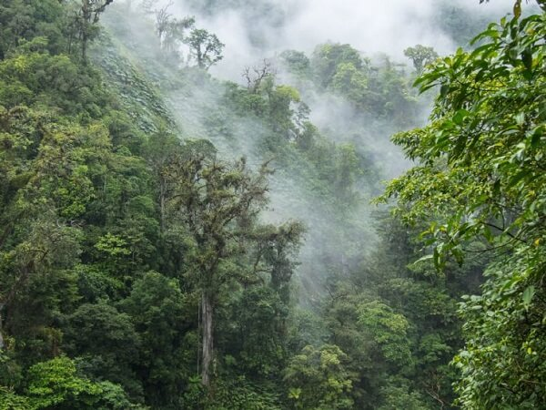 La réserve de Monteverde et de Santa Elena, Foret nuageuse