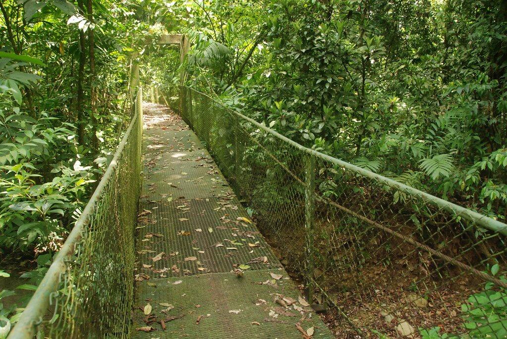 Le parc national de Carara, les sentiers du parc