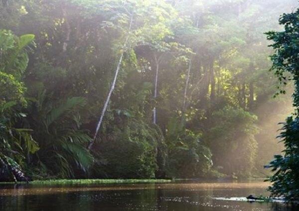 Le parc national de Tortuguero, le canal de Tortuguero et sa forêt tropicale, côte caraïbe nord du Costa Rica