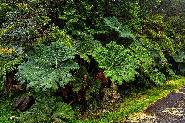 Le parc national du volcan Poas, le parapluie du pauvre Costa Rica