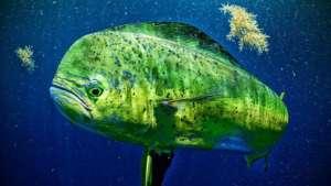activités excursions visites costarica, pêche en mer au Costa Rica