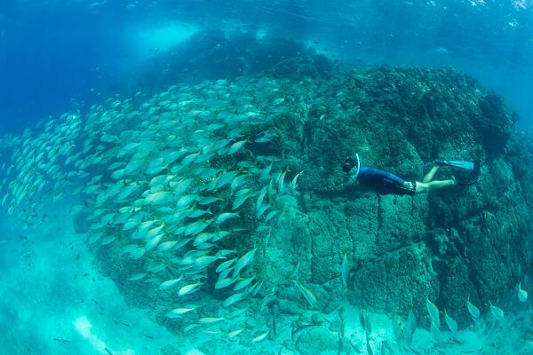 Snorkeling dans l'océan Pacifique. Vacances sur mesure au Costa Rica