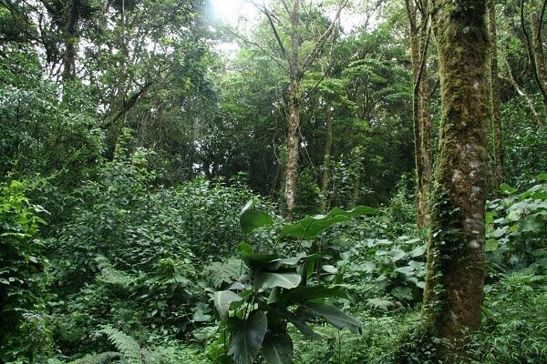 Le climat du Costa Rica