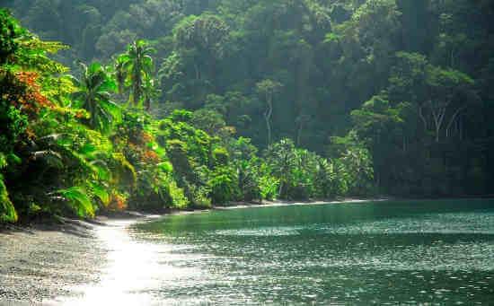 Rivière dans la jungle de la zone protégée du Corcovado, péninsule de Osa. Voyage sur mesure au Costa Rica